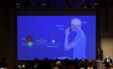 Эксперт МИФИ пояснила значение открытия Нобелевских лауреатов по медицине